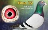 Blue 22