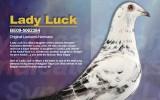 Lady Luck…….(Leekens Hermans)