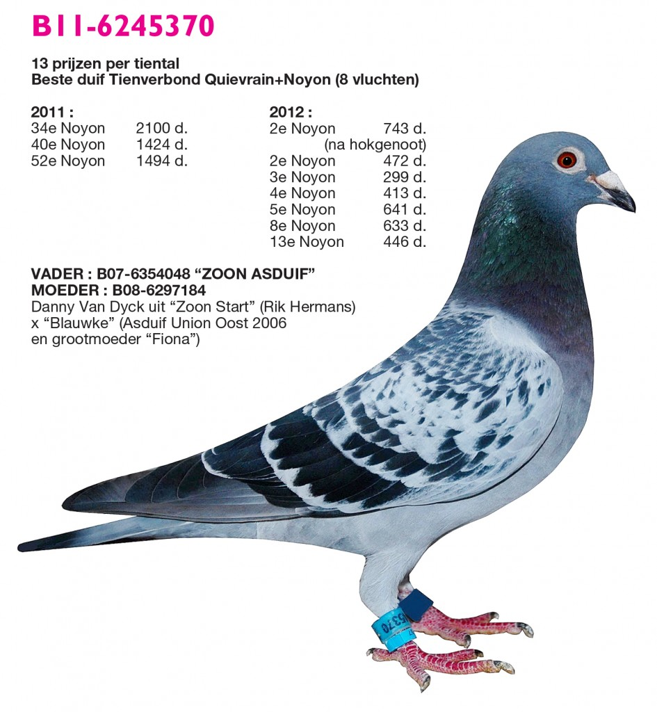 Racing pigeons breeding methods - photo#10