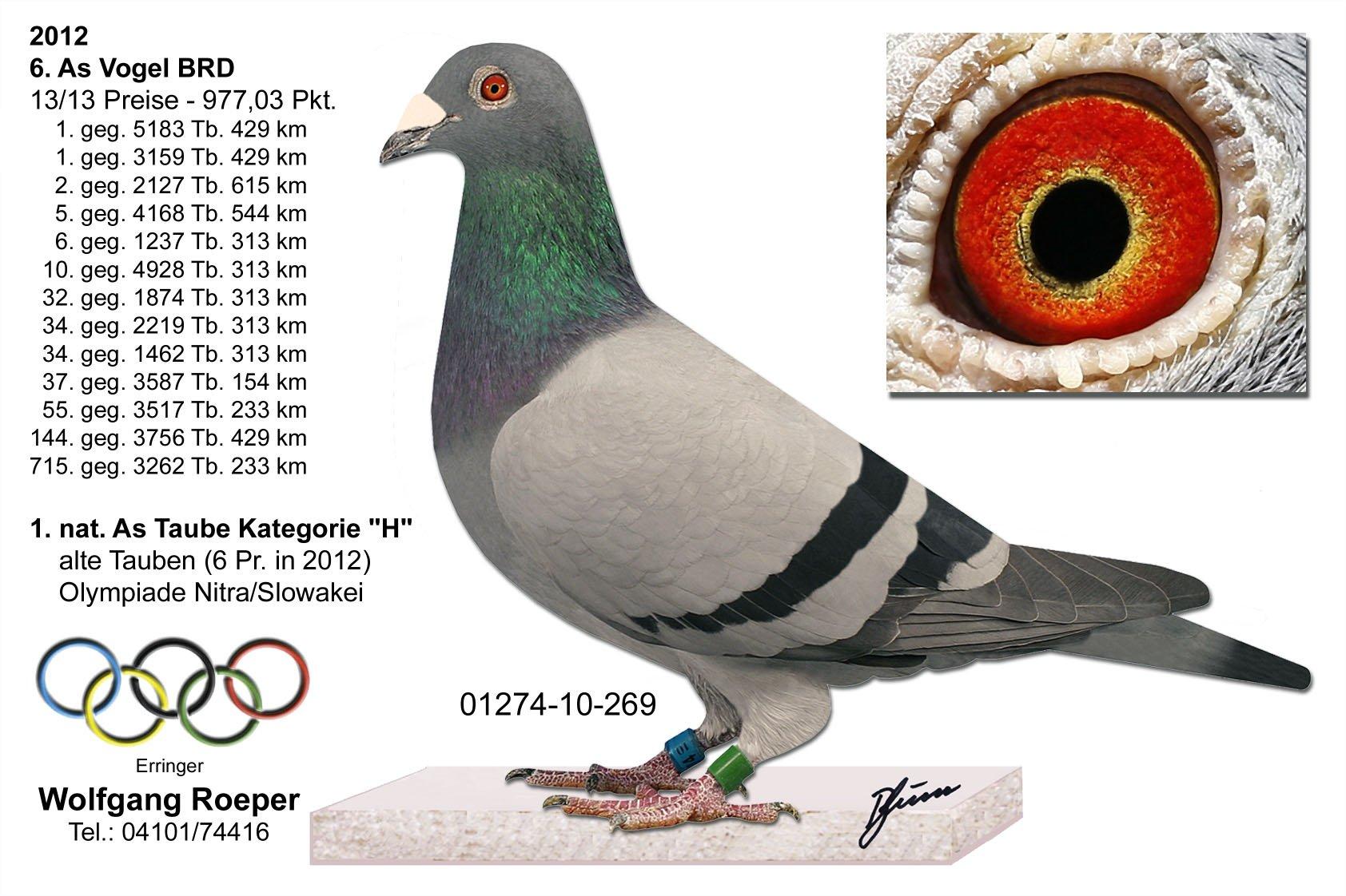 Racing pigeons breeding methods - photo#3