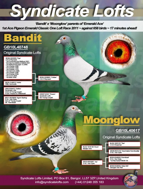 Bandit & Moonglow