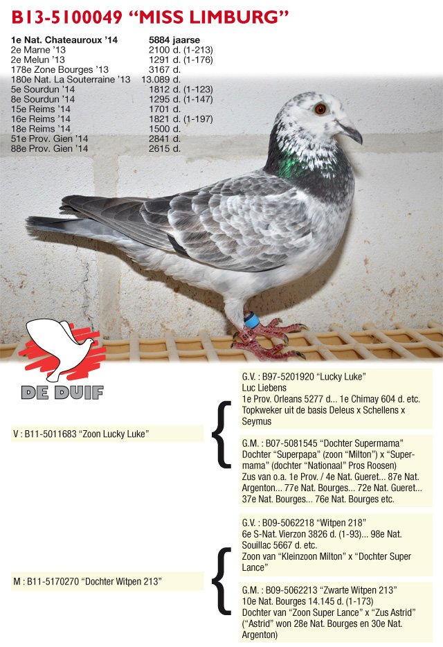 Bosmans-Leekens_B13-5100049-MissLimburg(1)