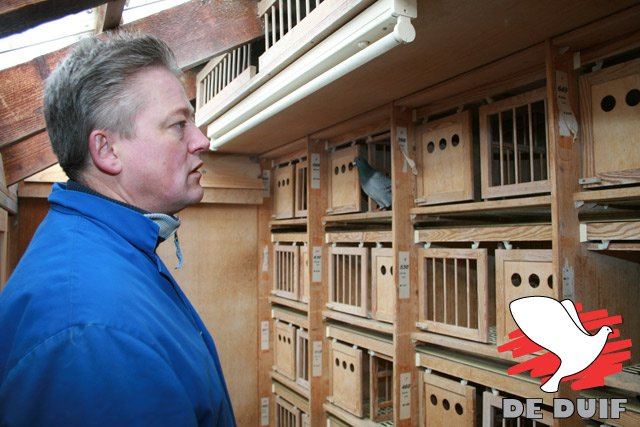 Frank Sander in the widowers' loft. The nest boxes of the old pigeons are still closed...