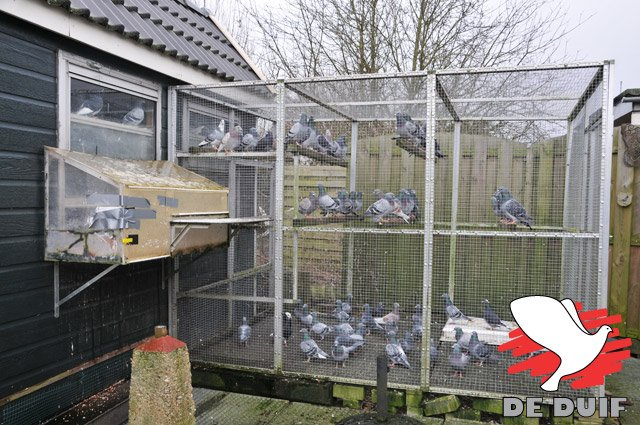 An aviary in front of the boxes... a blessing for the health of the pigeons!