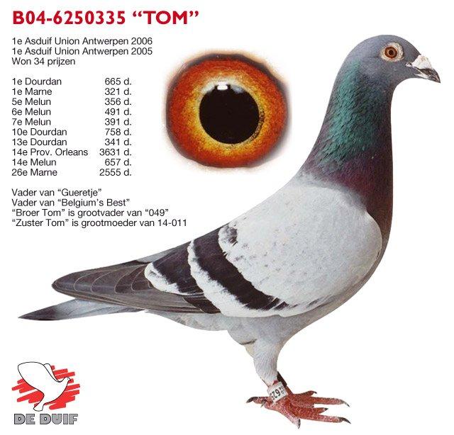 Roodhooft-Andre_B04-6250335-TOM