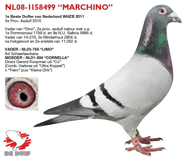 Verbree-Co-Piet_NL08-1158499-MARCHINO